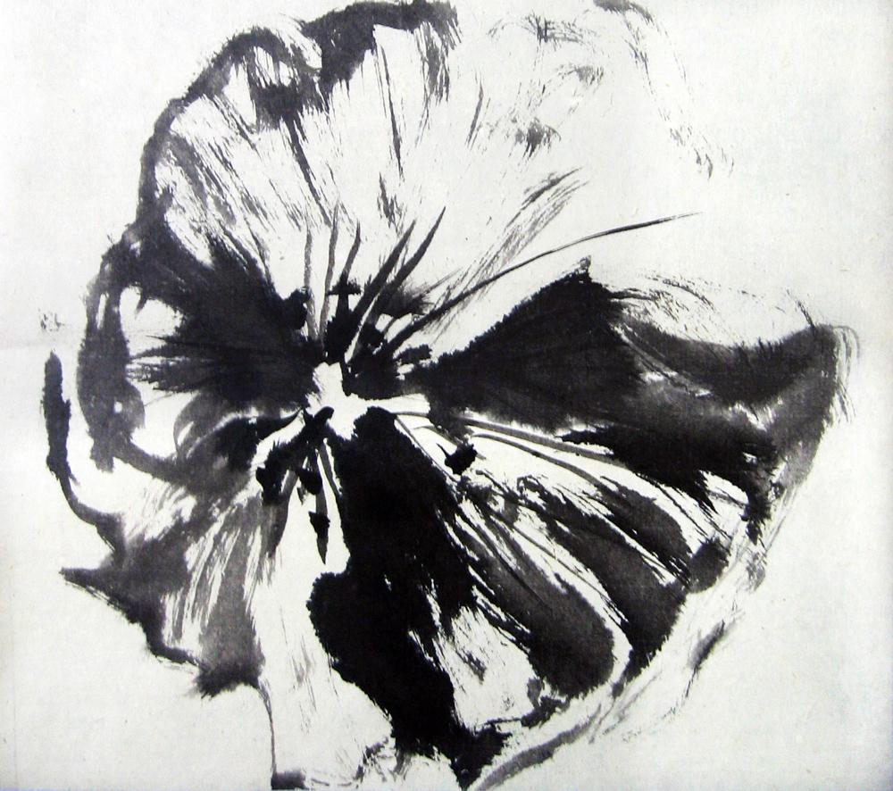 Coquelicot, 2008 | Encre sur papier - Collection particulière