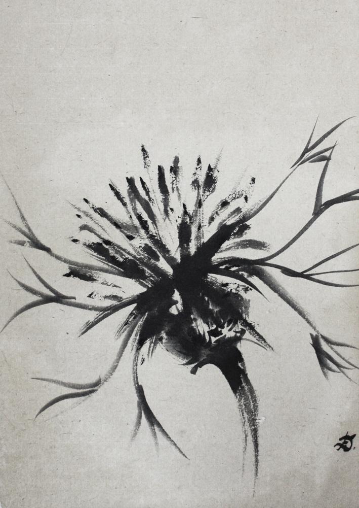 Centaurée, 2008 | Encre sur papier - Collection particulière